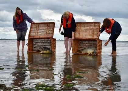 Stichting Zeehondenopvang Eemsdelta in Termunterzijl vangt ook dit jaar nog geen zeehonden op