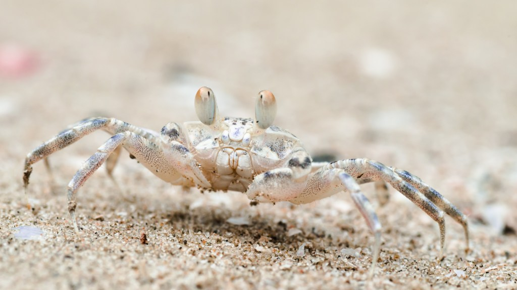 Beach Sand Crab 4K Wallpapers Download for Galaxy Note 20