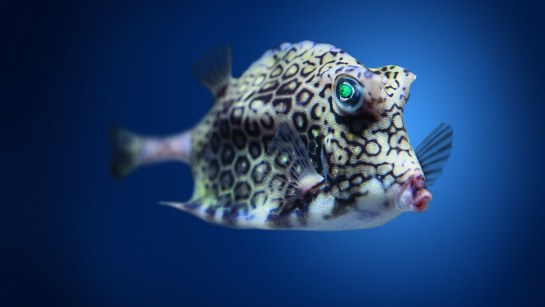 Ugly Cowfish 4K UHD Wallpaper for iPad pro