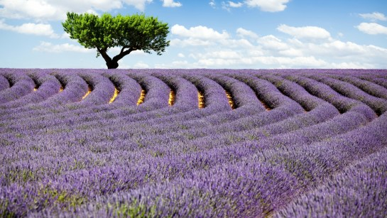 Provence France Lavender Field UHD 4K Landscape Wallpaper for PC