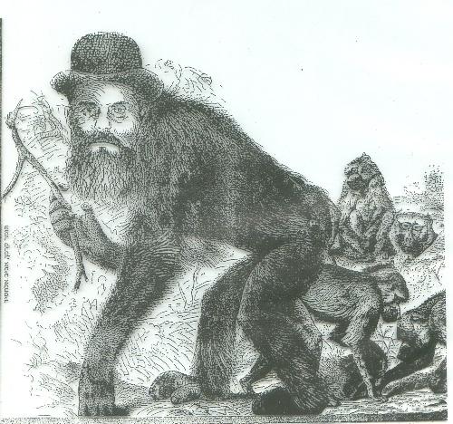 החרדי כקוף