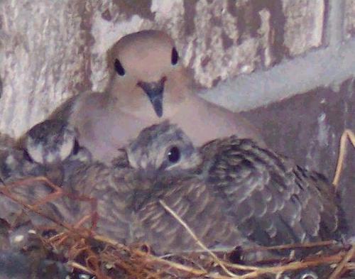 ציפור עם גוזלים מאפשרת לקיים את המצווה