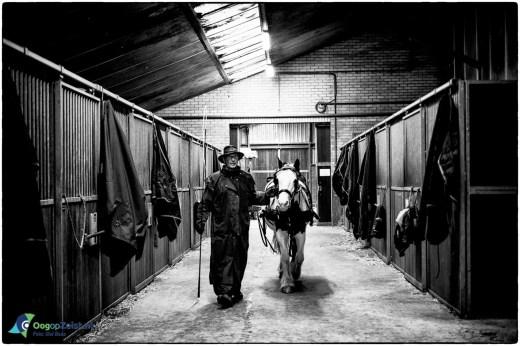 Koetstier komt terug in de stal van de PMM Prinses Maxima Manege