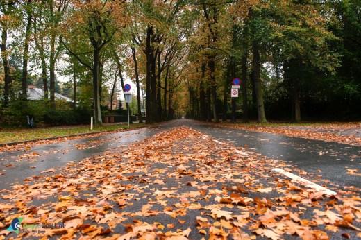 Bladeren op de verlengde slotlaan herfst