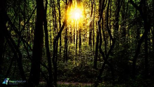 Zonsondergang in het Zeisterbos