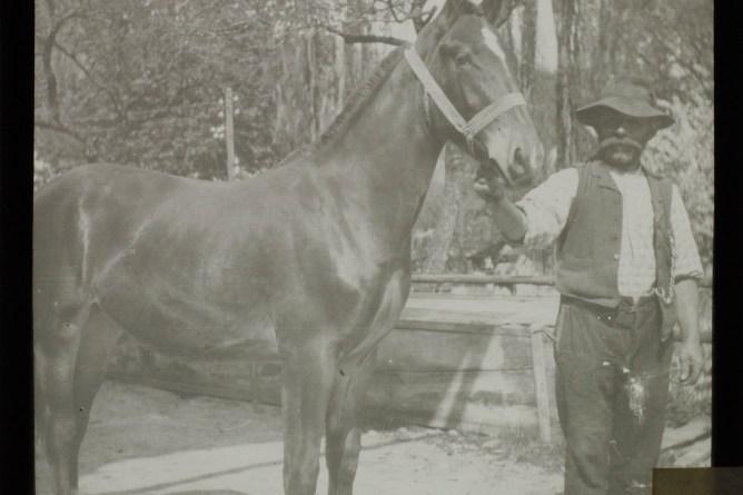 Mann mit Pferd