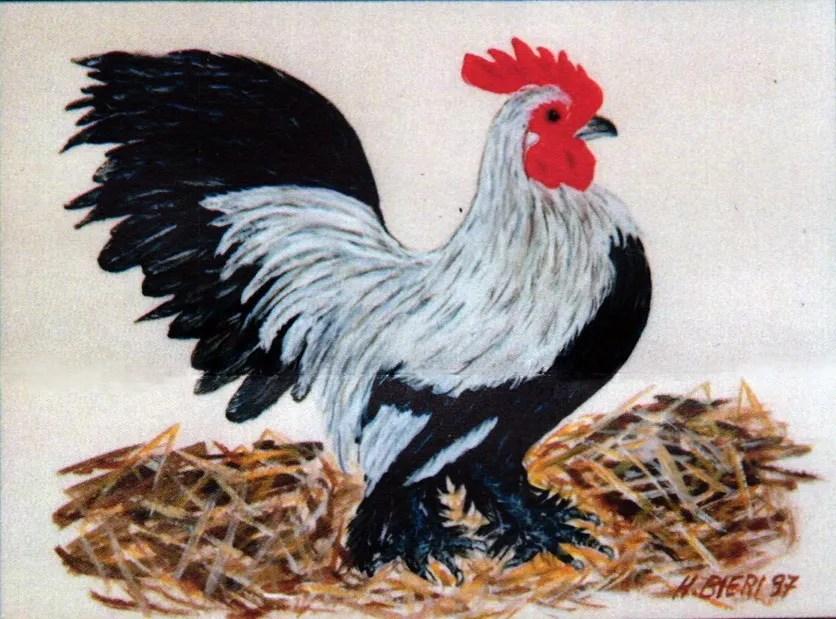 Gemälde von Hanni Bieri: ein Hahn im Stroh.