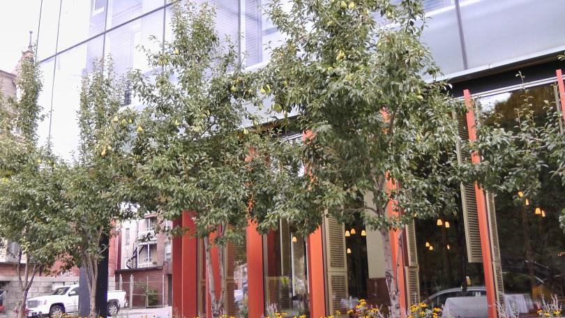 Pears in front of the Institut de tourisme et d'hôtellerie du Québec