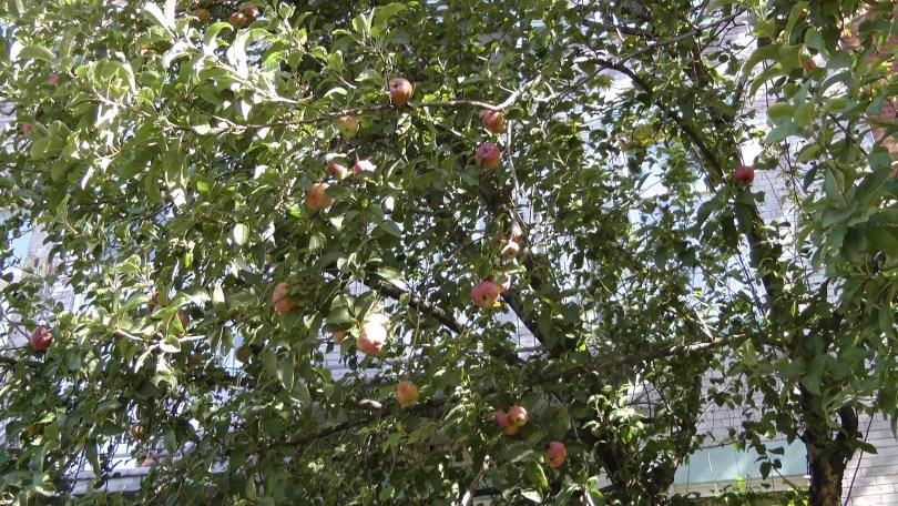 Another view of Apples on de L'Esplanade