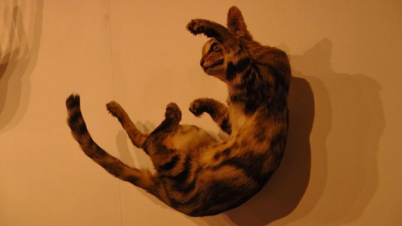 Kate Puxley, Senza Terra: Cat - Beaumont, Naturalized Cat