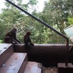 ひたすら階段と猿