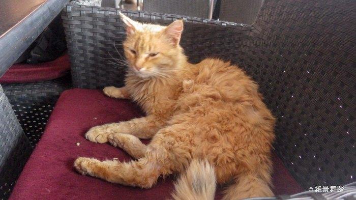 アイトベンハッドゥの猫