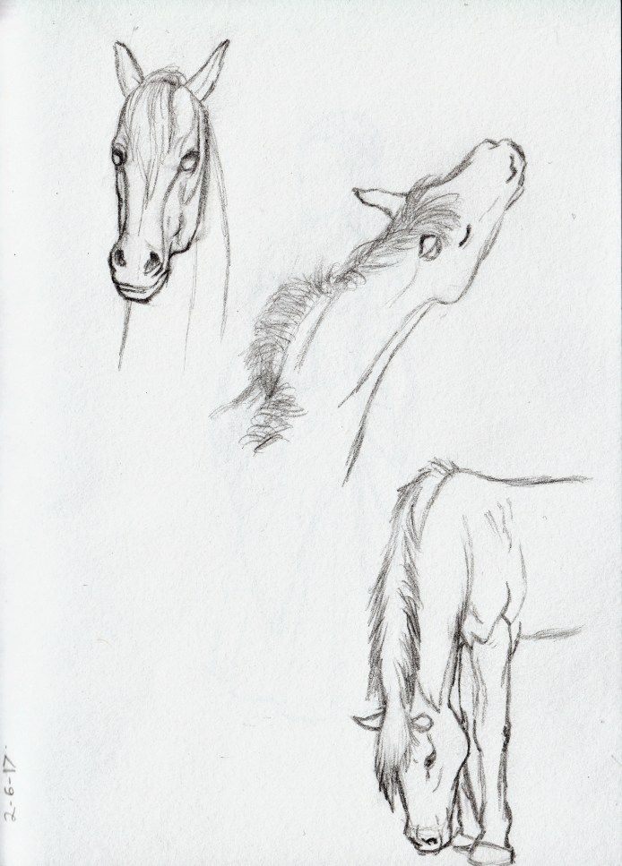 Reference Horse Study