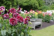 """Осінні квіти - топ-5 """"Зеленої Садиби"""" (част.II)"""