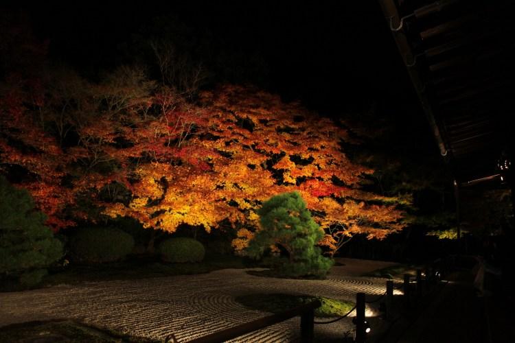 Правильне освітлення щовечора перетворюватиме ваш сад на казку