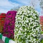 Вертикальне озеленення – клумба-башта з петуній