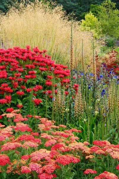 декоративні трави і злаки фото