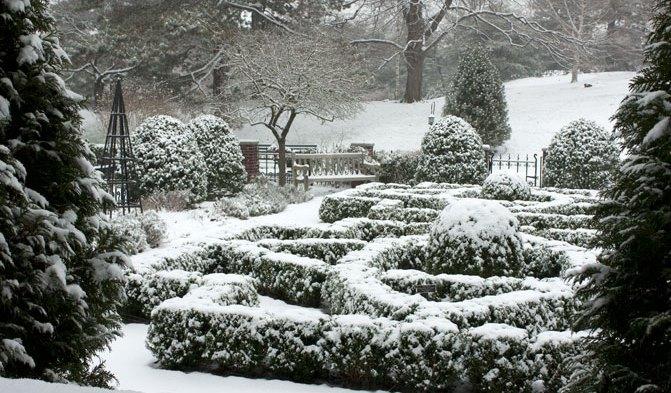 Вічнозелені рослини цінуються садівниками за декоративність протягом всіх сезонів.