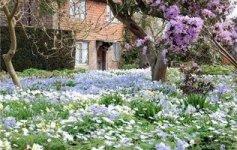 практичний сад фото