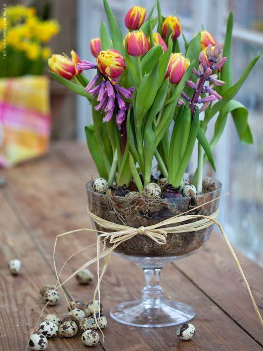 Вигонка весняних цибулинних