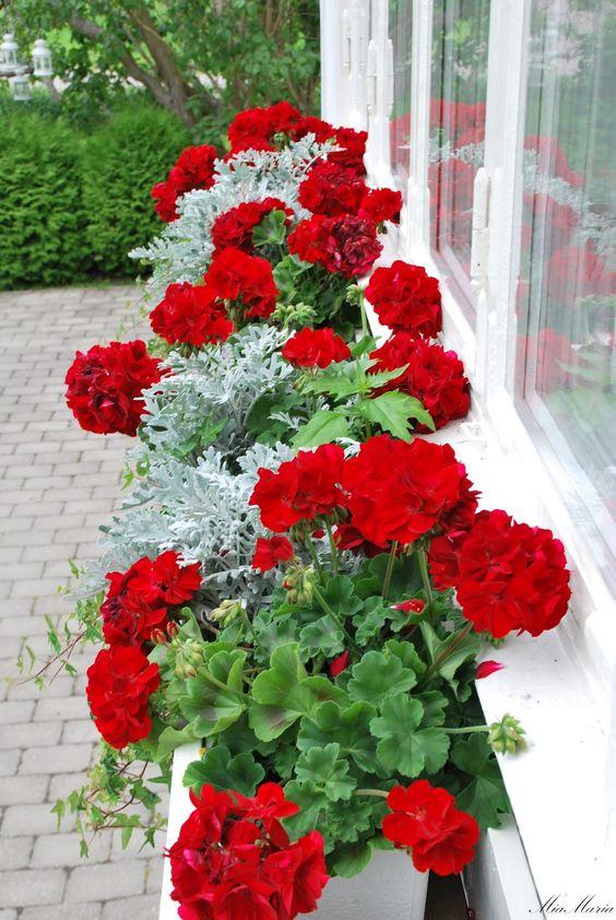 Дизайн саду повинен враховувати те, як колір рослин поєднується між собою та з спільним садовим фоном