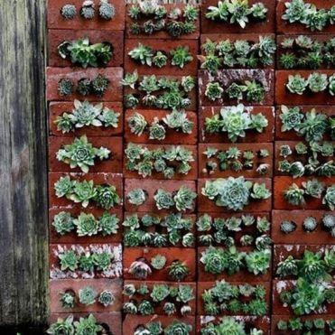 вертикальне озеленення зображення 42