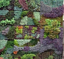 вертикальне озеленення зображення 44
