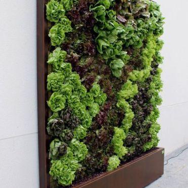 вертикальне озеленення зображення 48