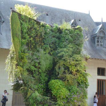 вертикальне озеленення зображення 57