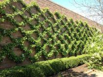 вертикальне озеленення зображення 60