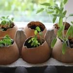 Про незвичайні способи вирощування розсади