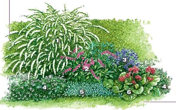 квітник зображення 11
