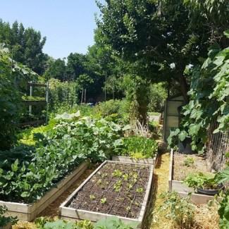 органічне землеробство зображення 3