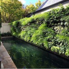 вертикальне озеленення зображення 8