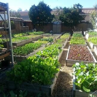 органічне землеробство картинка 4