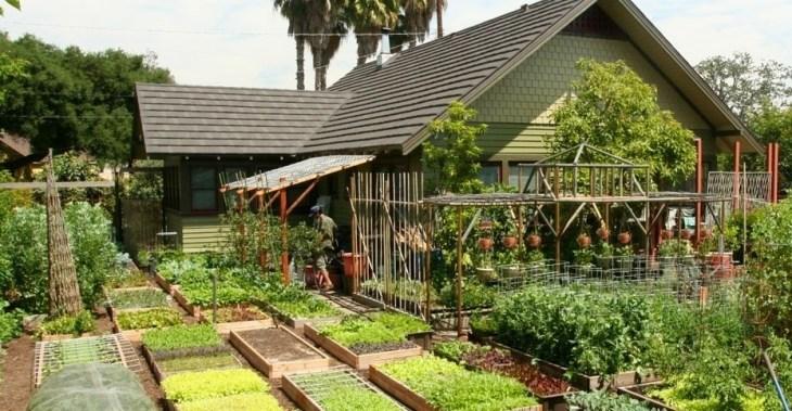 Як американці 3 тонни овочів на 4 сотках вирощують...