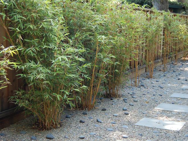 бамбук зображення
