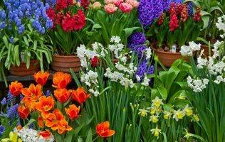 перші весняні квіти зображення