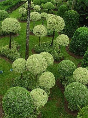 ідеї для саду картинка 13