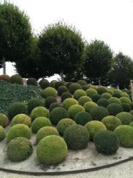 ідеї для саду картинка 17