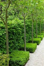 ідеї для саду картинка 22