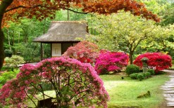 Японський сад зображення 22