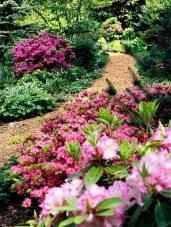 ідеї для саду картинка 50
