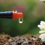 Крапельний полив – економимо воду і час