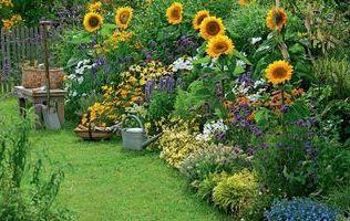Ландшафтний дизайн для новачків. Створюємо квітник безперервного цвітіння