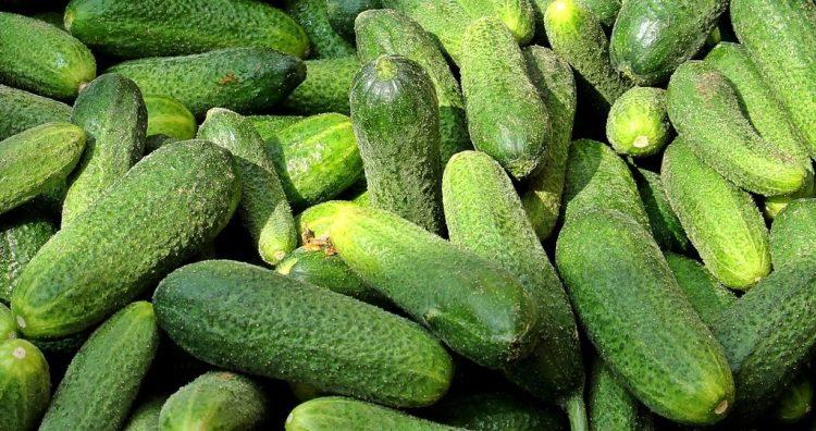 Період плодоношення огірків можна подовжити