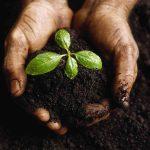Як покращити якість ґрунту – 5 екологічних методів