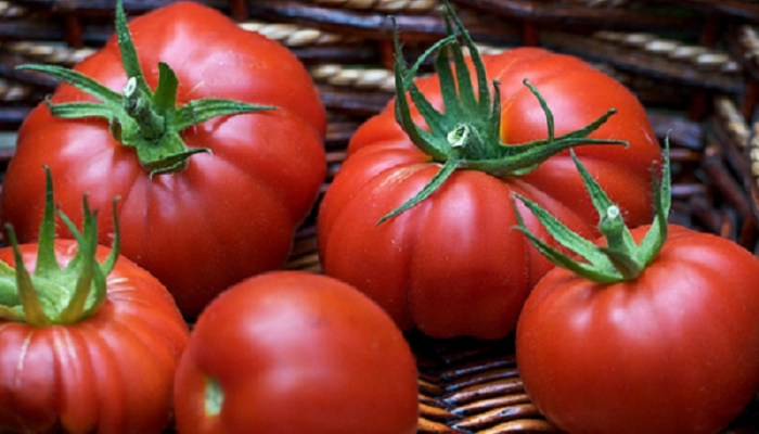 вирощування помідор в серпні картинка