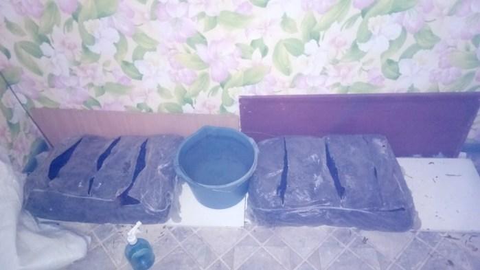 вирощування шампіньйонів вдома