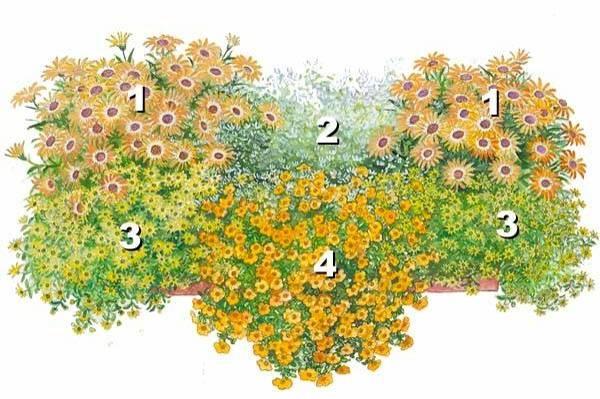 квіти для балконів фото